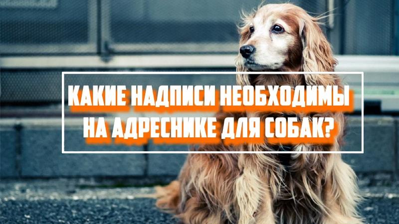 Какие надписи необходимы на адреснике для собак?